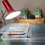 Galvanická lázeň a laboratorní zdroj